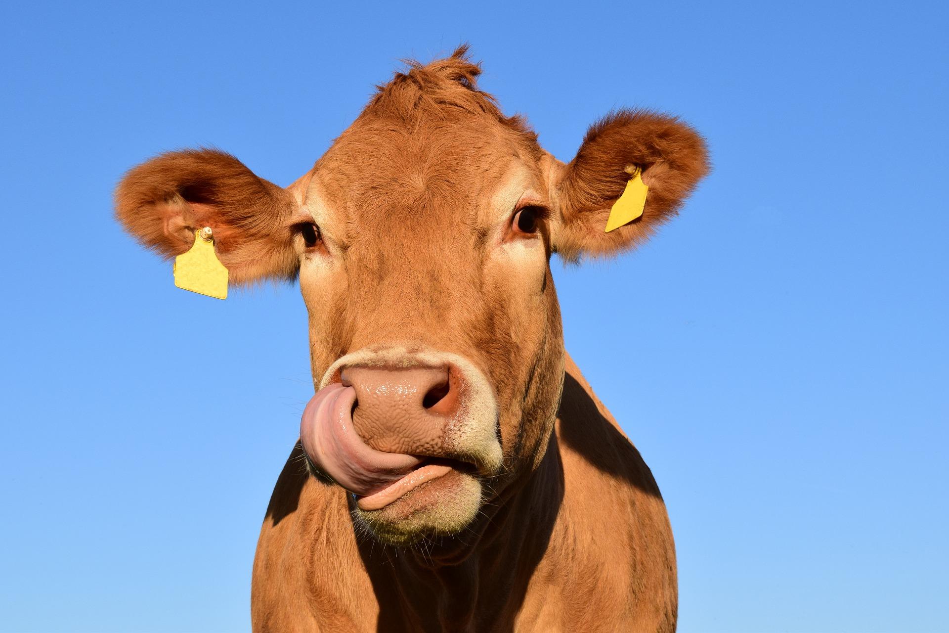 En quoi la traçabilité animale est-elle particulièrement importante aujourd'hui ?